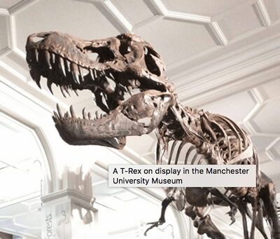 The dinosaur image, with a tooltip title on top of it that reads A T-Rex on display at the Manchester University Museum